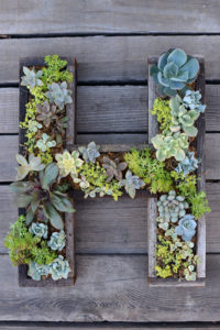 Wall mount diy garden idea