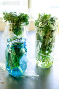 how-to-store-fresh-herbs-02