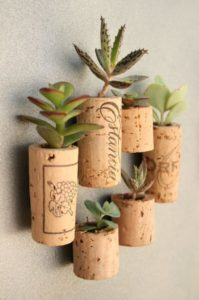 succulent plants decor ideas