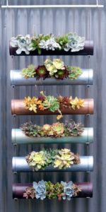 succulent plant decor idea 10