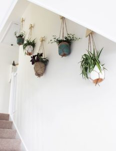 succulent plant decor idea 11