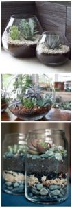 succulent plant decor idea 13