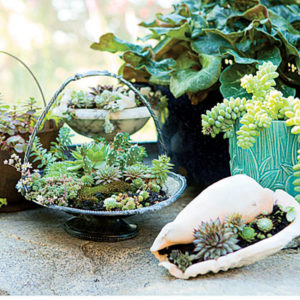 succulent plant decor idea 15