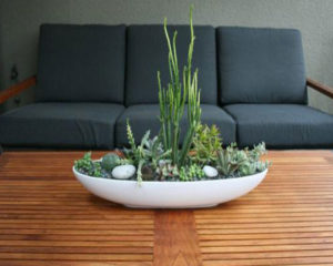 succulent plant decor idea 17