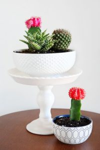 succulent plant decor idea 18