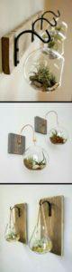 succulent plants decor ideas