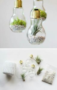 succulent plant decor idea 6