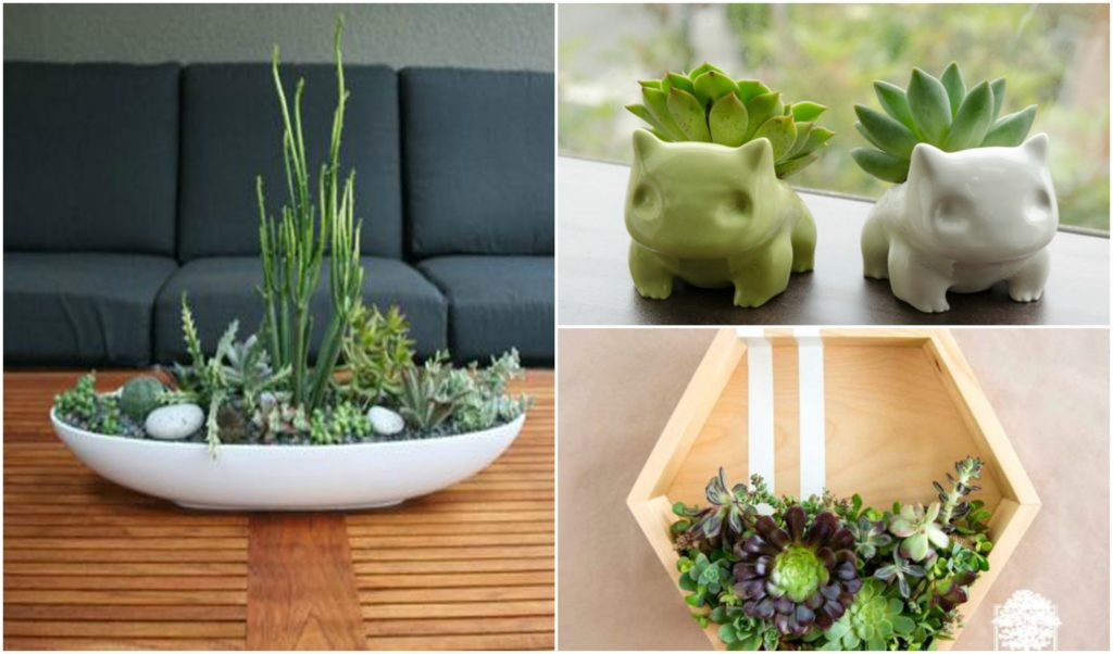 20 cute indoor succulent plant decor ideas to beautify - Indoor plant decor ideas ...