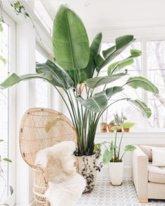 Ways to Update Your Home on a Budget 7