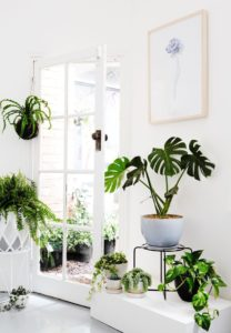 Tropical Indoor Plant Decorating Ideas