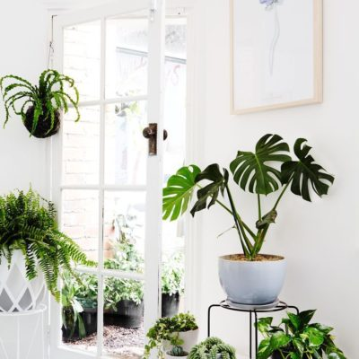11 Tropical Indoor Plant Decorating Ideas