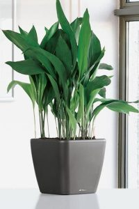 Indoor Plant that don't need sunlight