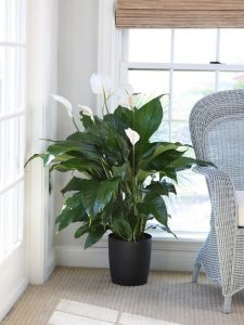 Indoor Plants that don't need Sun